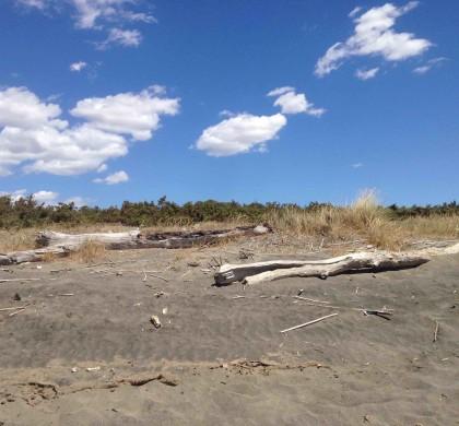 Come vecchi tronchi spiaggiati
